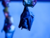 blue fruit bat