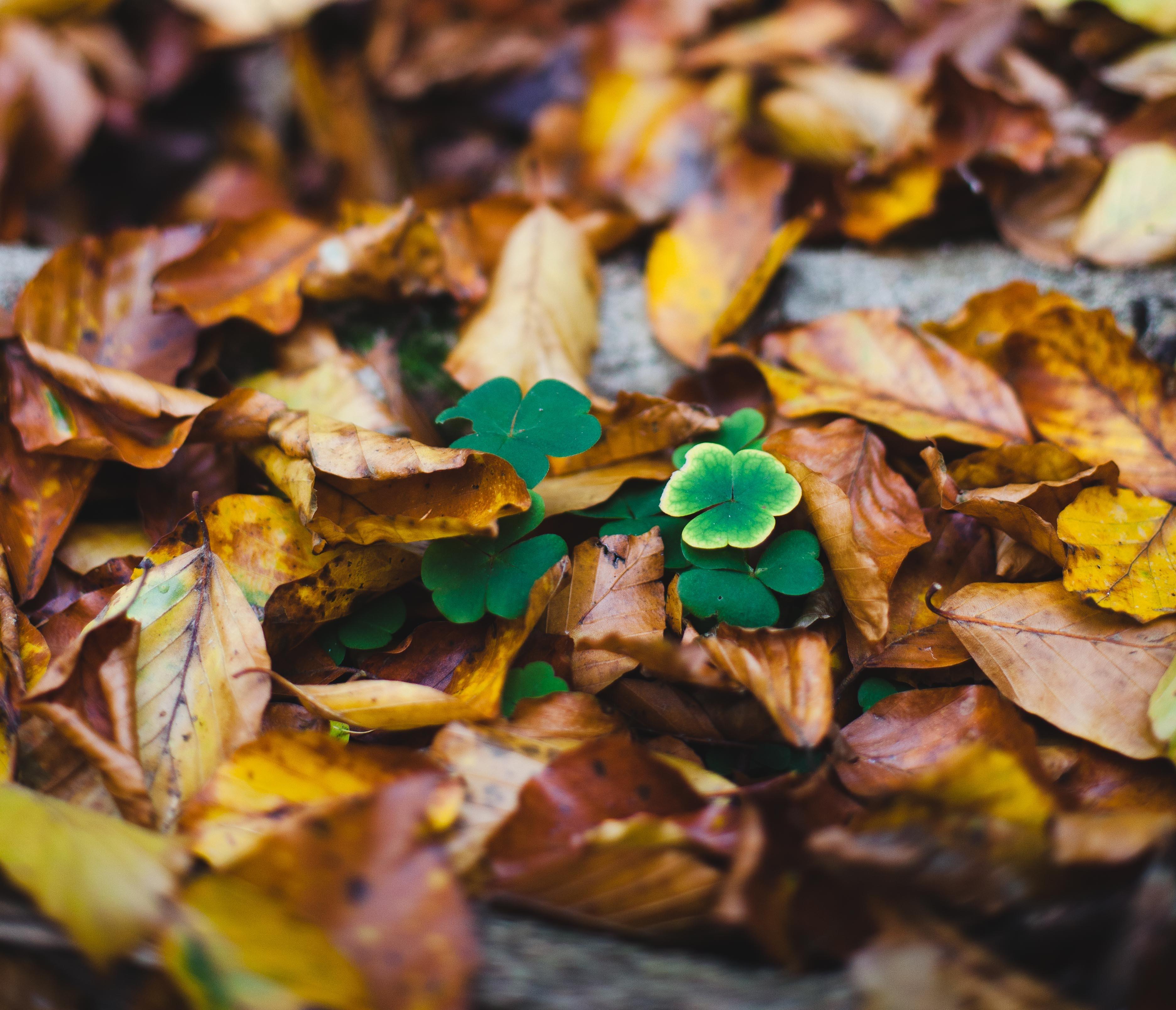 Herbst: Zeit für einen Spaziergang im Wald