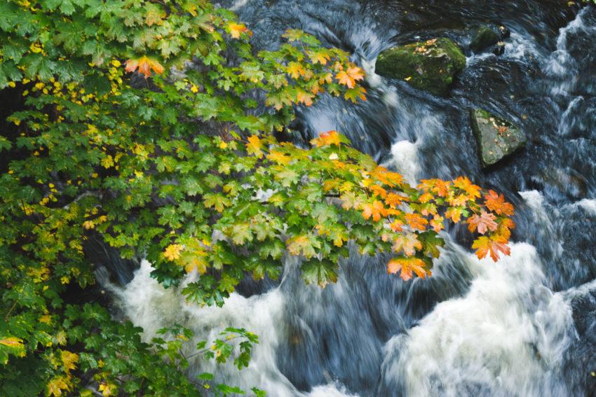 Herbstfarben über der Bode