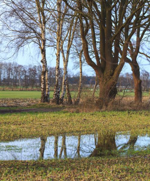 Baumspiegelung