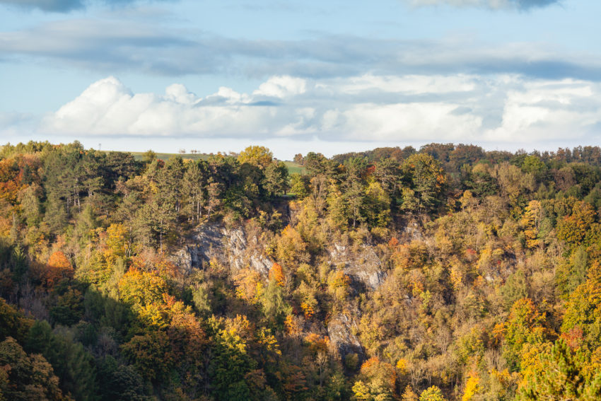 Wald über Rübeland