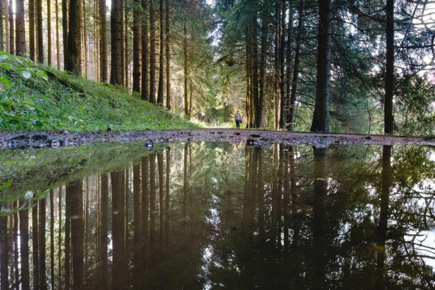 Spiegelung auf einer Pfütze im Wald