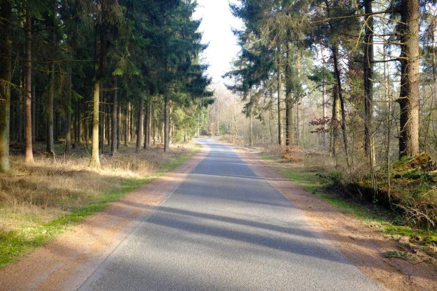 Waldspaziergang am Wochenende